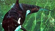 La mujer orca